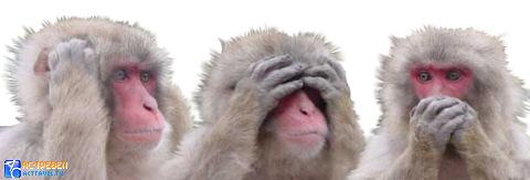 3 обезьяны не говорю не вижу не слышу игровые автоматы игровые автоматы играть бесплатно и без регистрации на демо счет