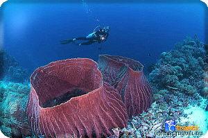 Дайвинг на рифе Туббатаха